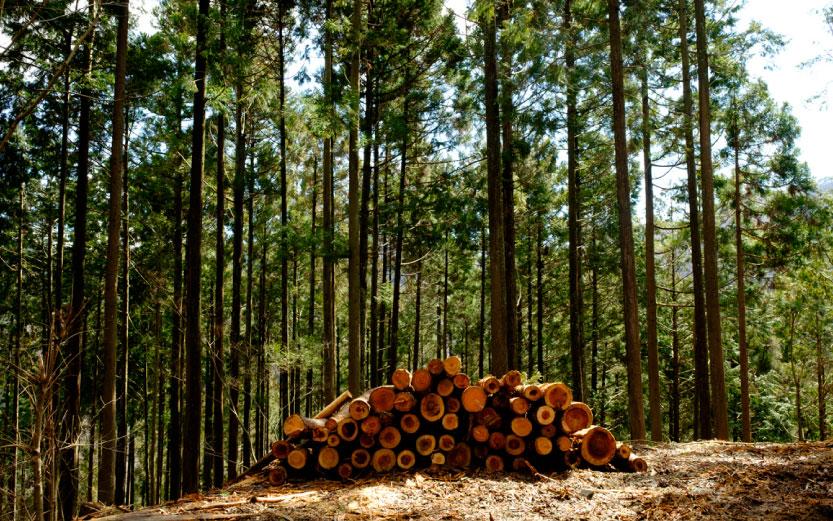 多摩産材を使うと森が育つ